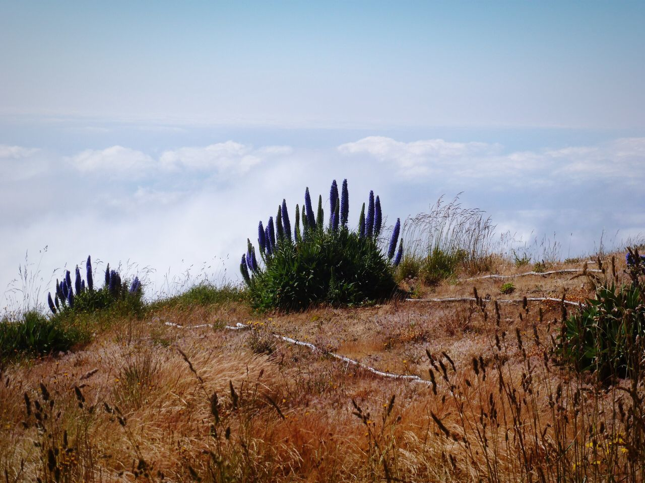Over The Clouds Clouds And Sky Clouds Flowers Plants Nature Nature_collection Color Of Life Grassfield Landscape Mountain View Madeira Madeira Island Portugal