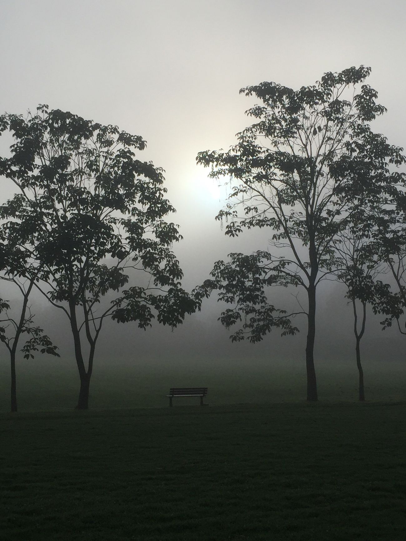 Mist in the park Tree Nature Tranquility Tranquil Scene mist Mist Mist In The Morning Neblina neblina en el parque banca en el parque Growth No People Fog Beauty In Nature Landscape Outdoors Hazy  Grass Sky Day