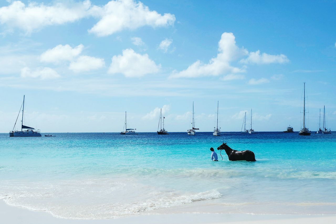Horse in Barbados Water Sea Sky Outdoors Nature Horizon Over Water Tranquility Tranquil Scene Beauty In Nature Cloud - Sky No People Day Horse Life Real People EyeEm Best Shots Eye4photography  Open Edit Fresh 3 Beauty In Nature Sea Life Travel Destinations Nature Blue One Man Only Beach The Great Outdoors - 2017 EyeEm Awards