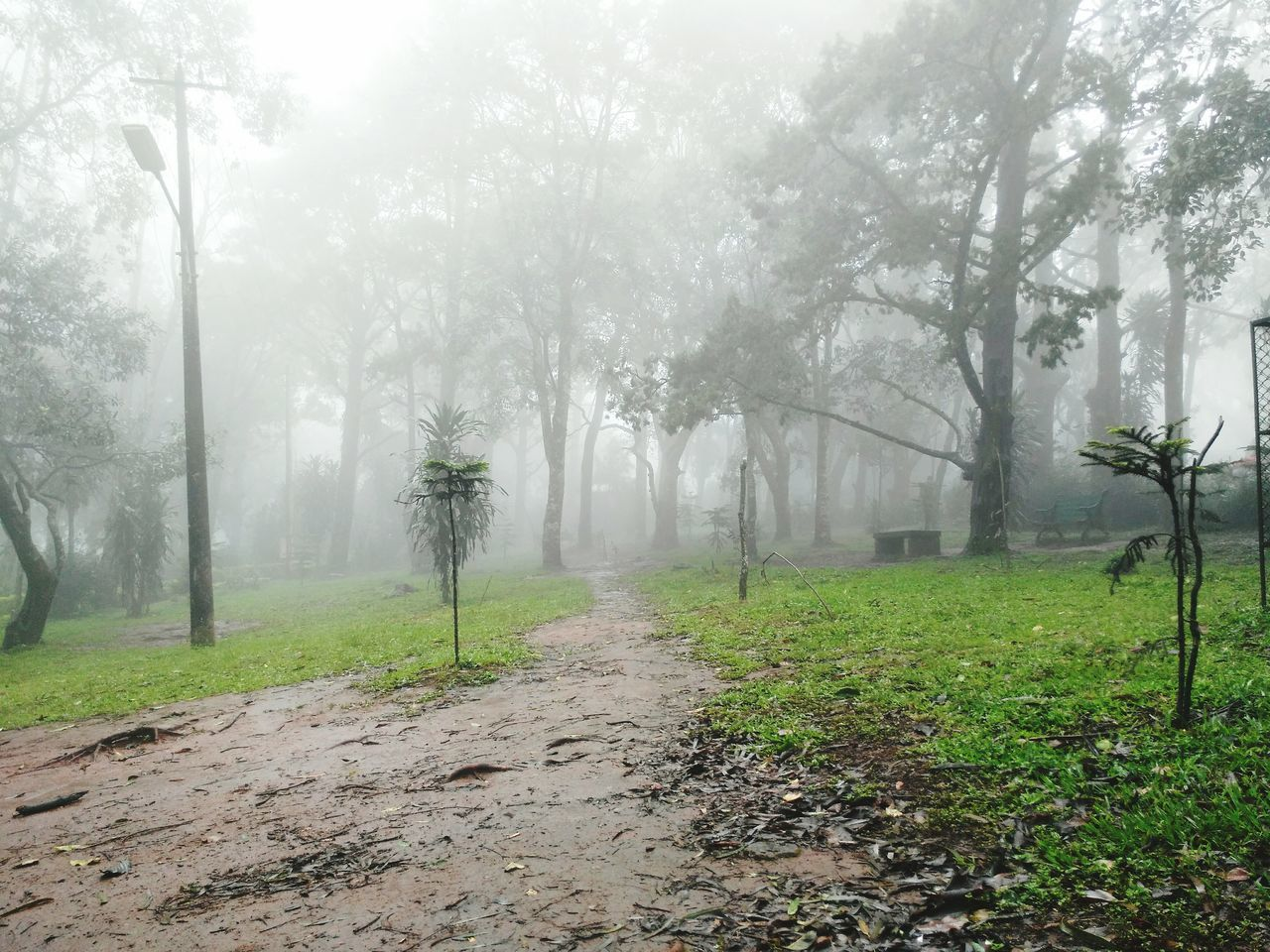 WoodLand Green Color Non-urban Scene Day Mist Beauty In Nature Weather Forest Fog Foggy Tree Botany Nature
