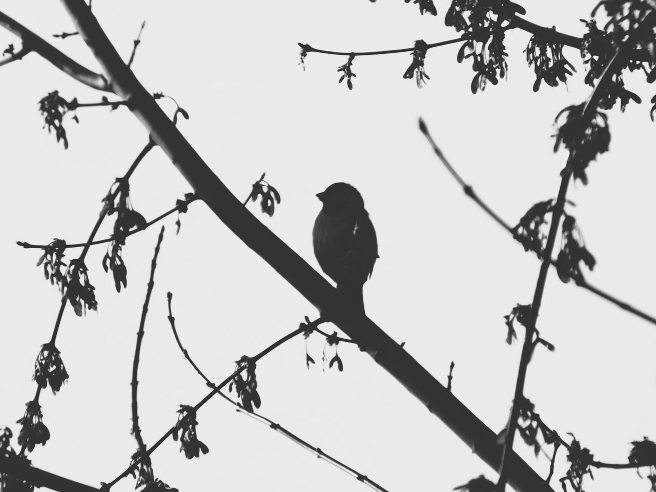 Bird Low Angle View Tree Silhouette Perching Bare Tree Branch Sky Outdoors Day No People Animal Themes Fujifilmhs35exr Eyeemphotography FujifilmFinePix Blackandwhite Black And White Photography Nature Photography Outdoor Photography Beautyinnature  EyeEmNewHere EyeEm Best Shots