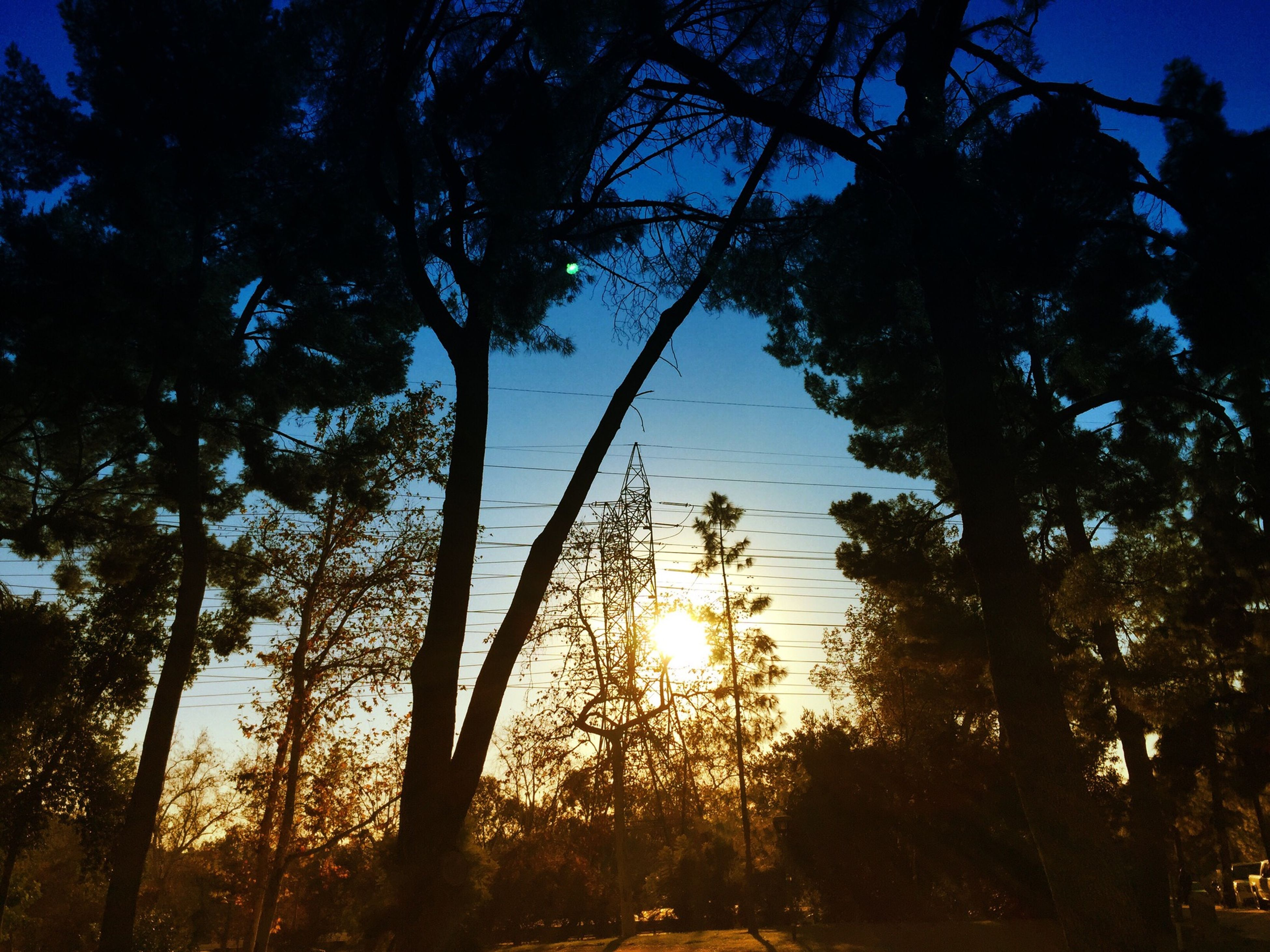 tree, tranquility, silhouette, growth, beauty in nature, tranquil scene, branch, nature, scenics, sky, sunset, sun, low angle view, sunlight, tree trunk, idyllic, blue, outdoors, clear sky, no people