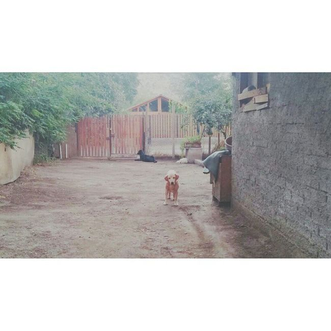 ✌🐶🐕 Doglover Dog Casa Jugamos ?