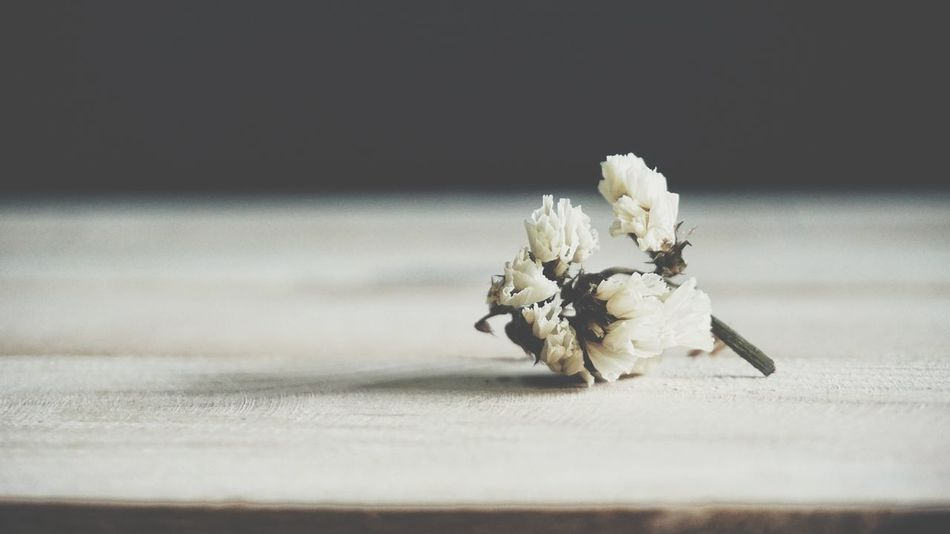 Died flower on wood table No People Close-up Flower Day Died Flower Sad Mood Vintage Nature Wood Table Flora Floral