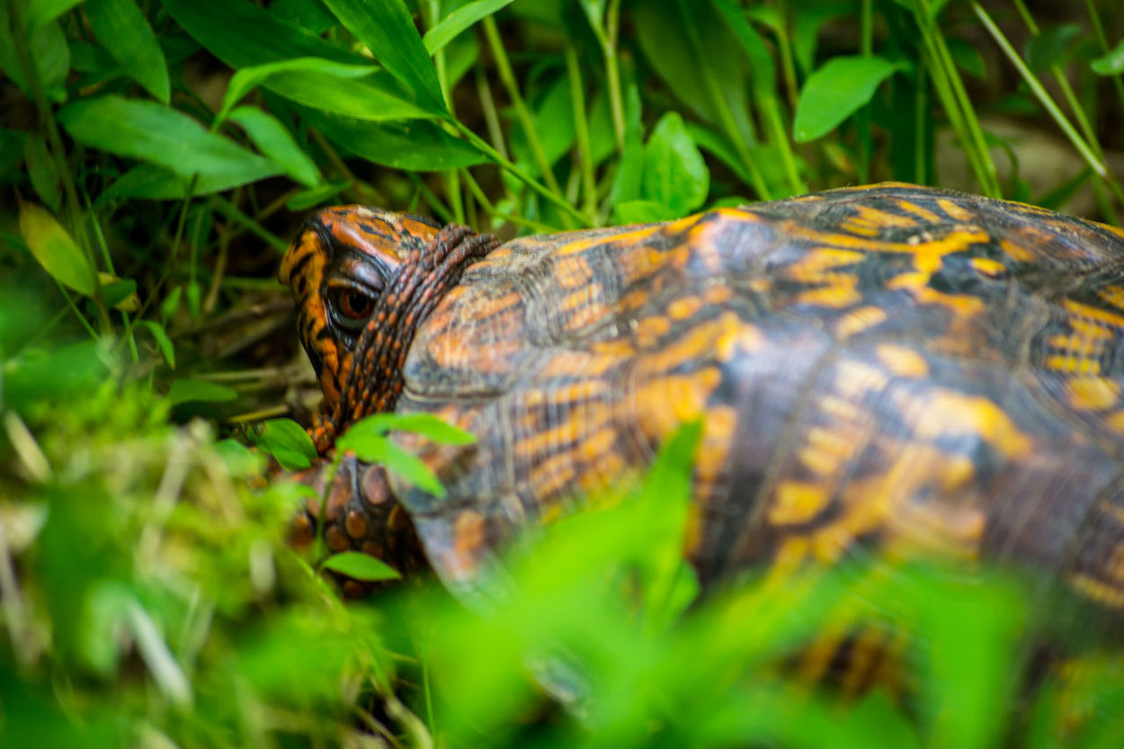 Depth Of Field Wildlife Nature Turtle