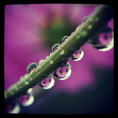 Plant Macro Closeup Reflection water droplet waterdroplet flower nature purple stem rain