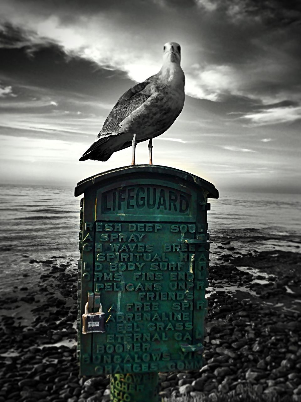 Seagull Perching On Lifeguard Box On Shore Against Sky