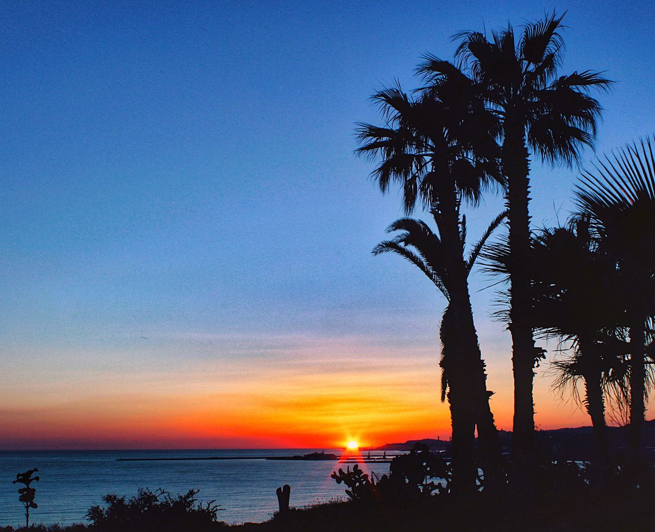 Tramonti siciliani Sicily Sicilia Agrigento SunsetSunset Palm Tree Beach Silhouette Sea Beauty In Nature Scenics Tree Water Sky Horizon Over Water Nature Tranquil Scene Blue Tranquility Outdoors Vacations No People Day Puesta De Sol
