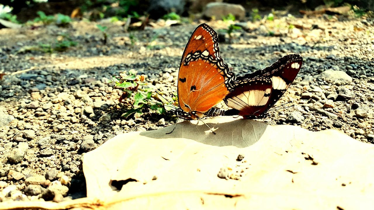 Beautiful butterfly Butterflies Butterfly ❤ MyLove❤ Leaves EyeEm Nature Lover Popular Photos Beautifullview Butterfly Effect Rajkotian Rajkot Gujarat