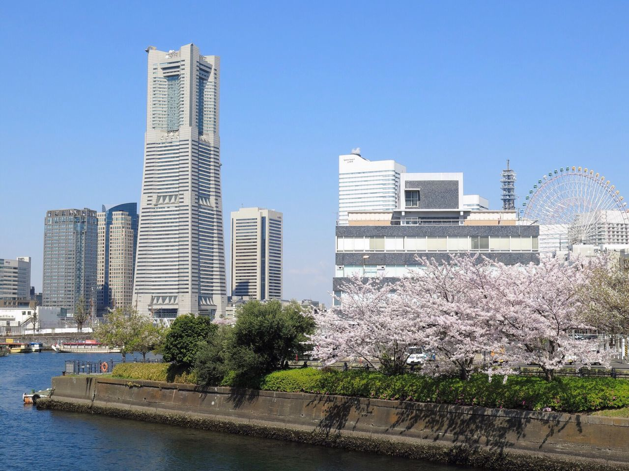 Architecture Built Structure Building Exterior Buildings & Sky The Street Photographer 横浜ランドマークタワー ランドマークタワー Sakura Cherry Blossoms Clear Sky PowerShot G16 Canon in Yokohama-shi , Japan