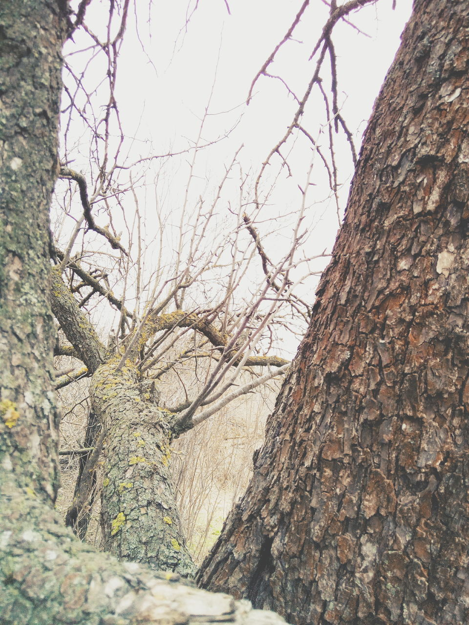 tree trunk, tree, day, nature, outdoors, textured, no people, growth, bark, branch, tranquility, close-up, bare tree, beauty in nature, sky