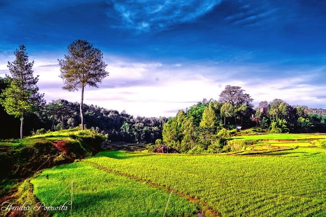 Paddy field @Toraja Village View Indonesia_allshots Paddy Field Toraja Utara Sulawesi Selatan Landscape_Collection Landscapelovers Landscape_photography Rice Field