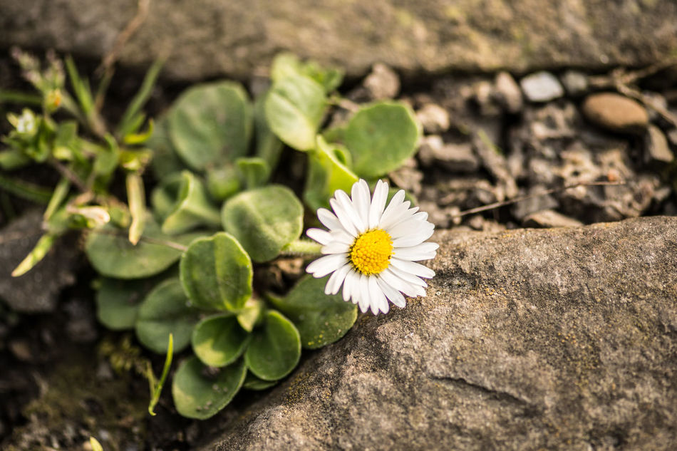 Beauty In Nature Blooming Close-up Day Flower Flower Head Fragility Freshness Green Color Growth Nature No People Outdoors Petal Plant EyeEm Flower Flower Photography EyeEm Nature Lover Outdoor Beauty Flowers Flower Collection Flowers_collection