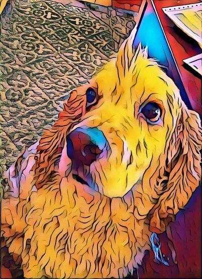 Close-up Dog Pets Weird Dog Finnegan