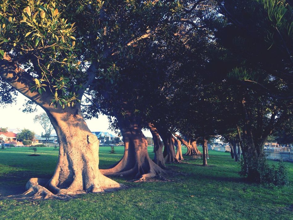 Trees Tree Line Roots Trees In Line