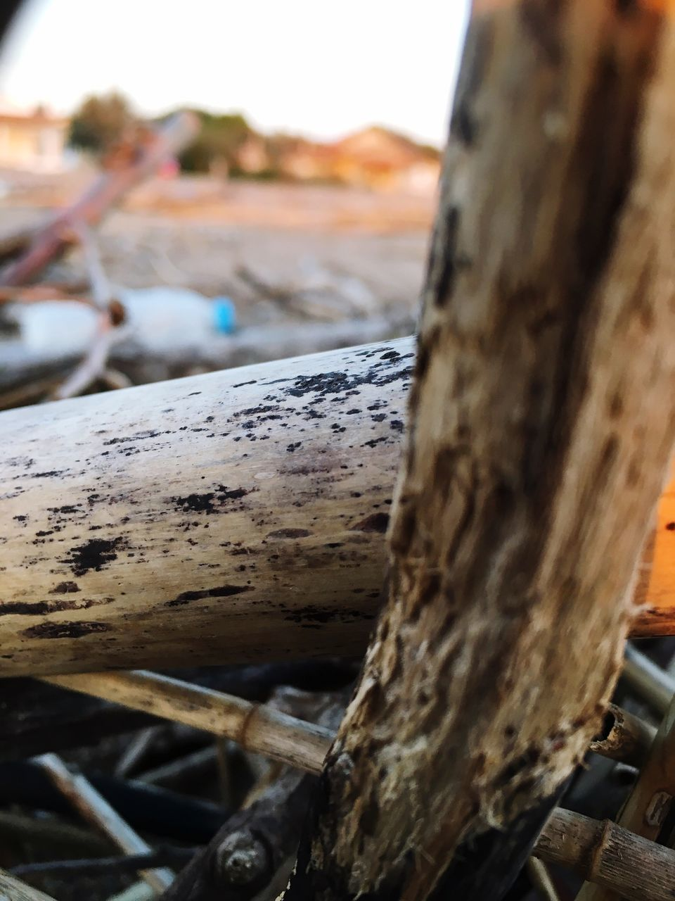 tree trunk, wood - material, focus on foreground, close-up, tree, textured, day, log, no people, outdoors, nature, sky