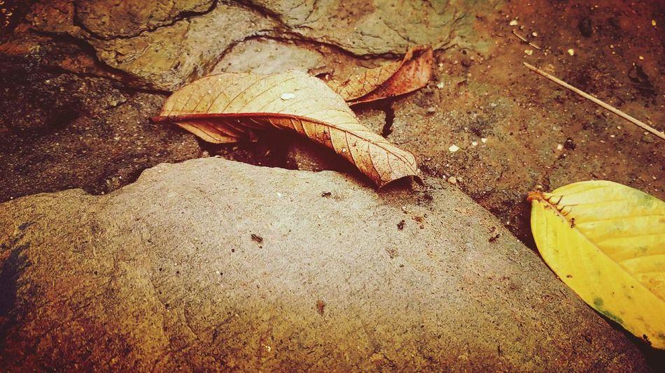Rainy Days Raining Day Vijendrapaliwalphotography Mydesign Udaipur India