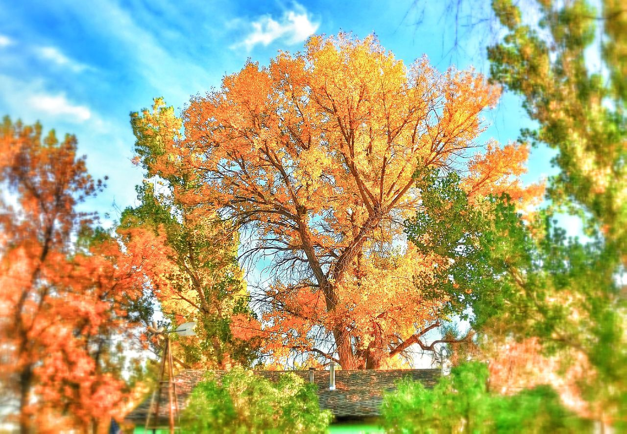 Change Cottonwood Trees Depth Of Field Fall Beauty Fall Colors Growth Magestic Trees Selective Focus Worland WY Wyoming
