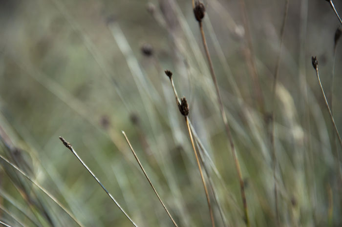 Autumn Autumn Colors EyeEm Nature Lover Field Fieldscape Grass Green Green Color Nature Photography The Week On EyeEm Beauty In Nature Blurred Background Blurred Motion Growth Landscape Nature Nature_collection Naturelovers No People Outdoors Plant Selective Focus