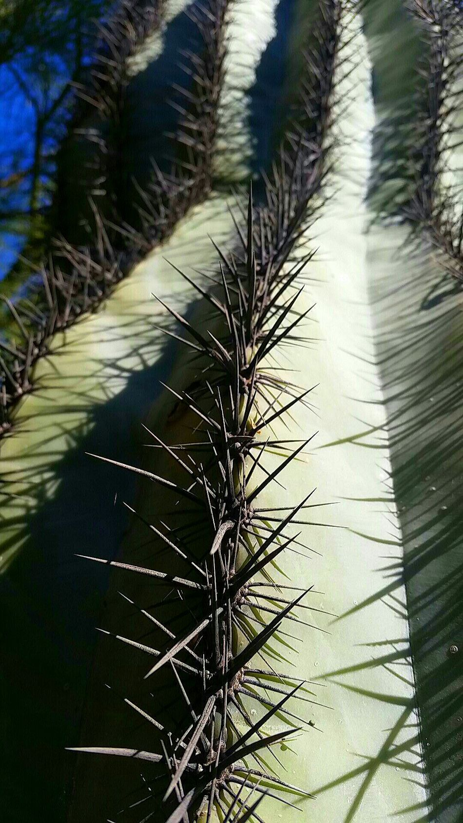 Check This Out From My Point Of View Cactus Pricks  Hot Day