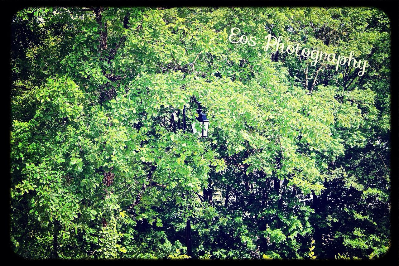 green, leaves, nature, harmony, healthy, adventure, lush, flora, forest, vegetation, foliage, sunshine, day, no people