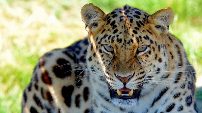 Cat Wildlife Animals Nature Nature_collection Eye4photography  Smile Popular Cheese! Beautiful