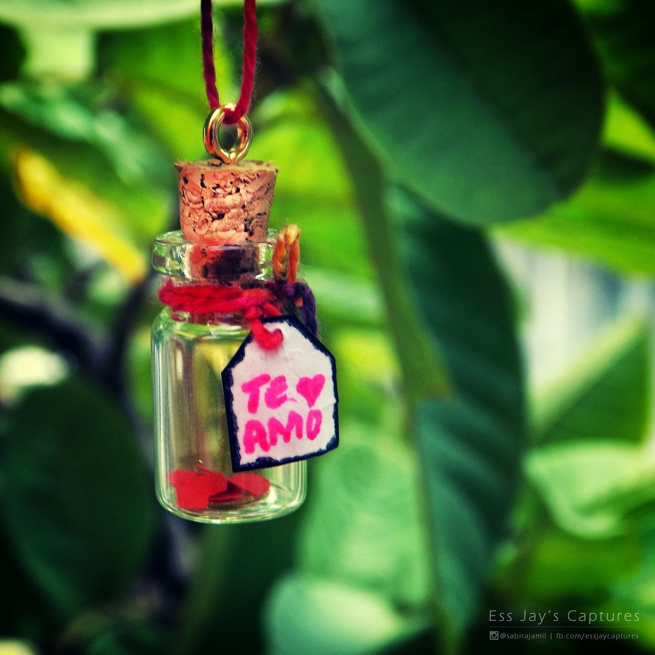 Focus On Foreground Hanging Close-up Plant Day Pink Color Red Teamo ForMyBestfreind Love Lovebonding Lovephotography  Essjayscaptures Outdoor Photography Miniaturephotography Macrophotography She Quotes