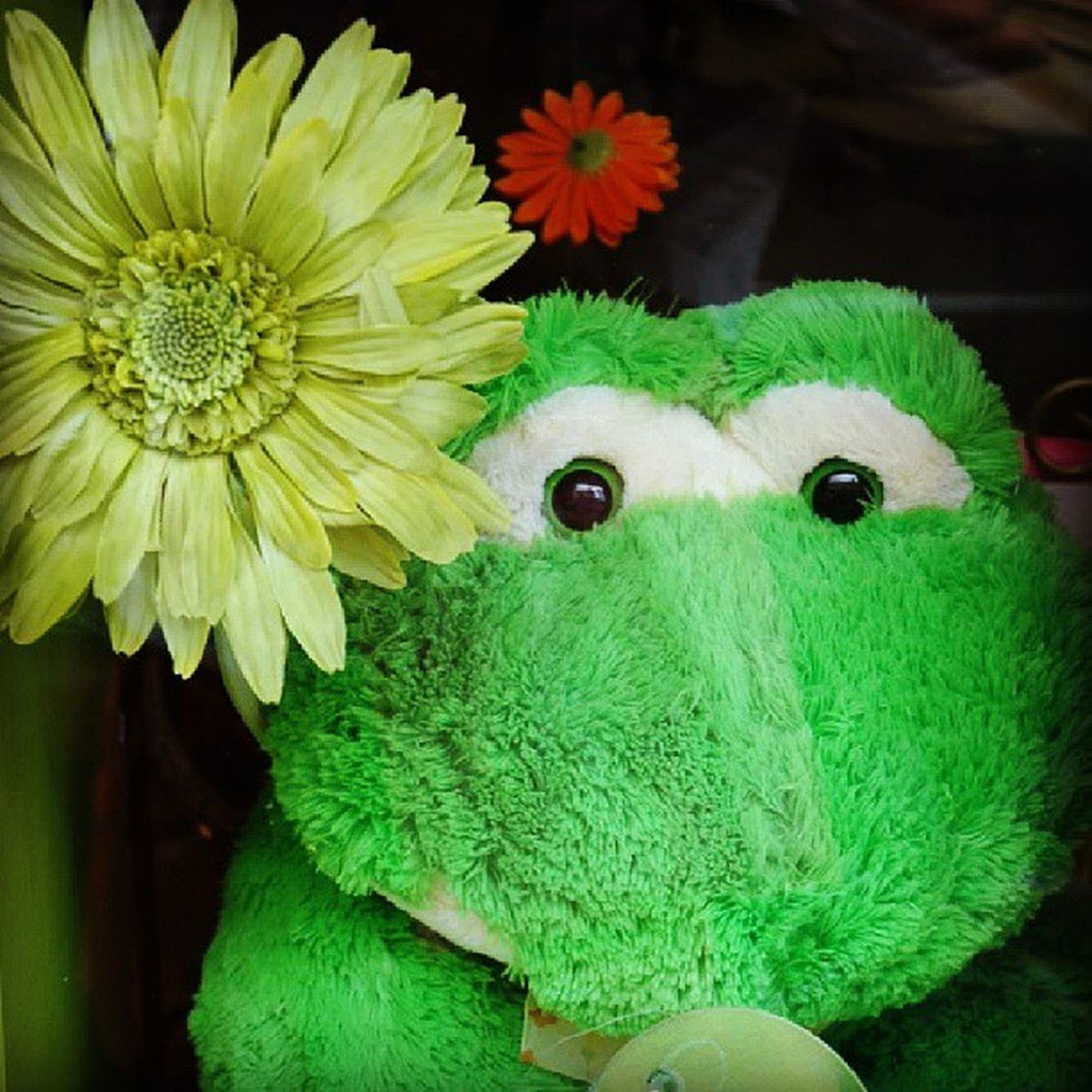 """""""Aloha! please meet Froggie Croakie. He hails from Big Island, Hawai'i . We met in May 2008. ╰( ̄▽ ̄)╭ Saw him peeping thru' the window but we aren't fated to be together...however, he has been frozen in time in S'pore...^^b"""" Storyoftheday Allshots_ Almaproject Quoteism Canvasme Dailythemes Green Frog Froggie Gf_usa Gf_daily Gang_family Toys Ig_toydolls Ketsourinemacarons Walkwaywhy Siam_minimal_green Siam_minimal Igkreatif Ig_fotogramers Softtoys Ourlifetoday Snappeak Pb_px Phototag_it instagram_sg instagrammers hawaii ig_singapore theymakemehappy_pg"""