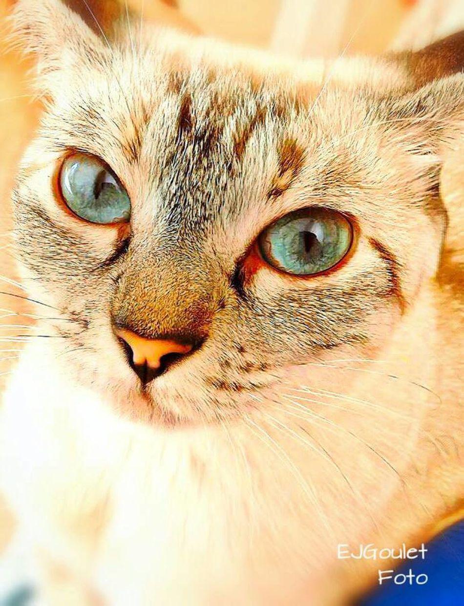 animal reflections . . . Kitty Domestic Feline Portrait Furryfriend Cat eye Reflection tame Pet close up