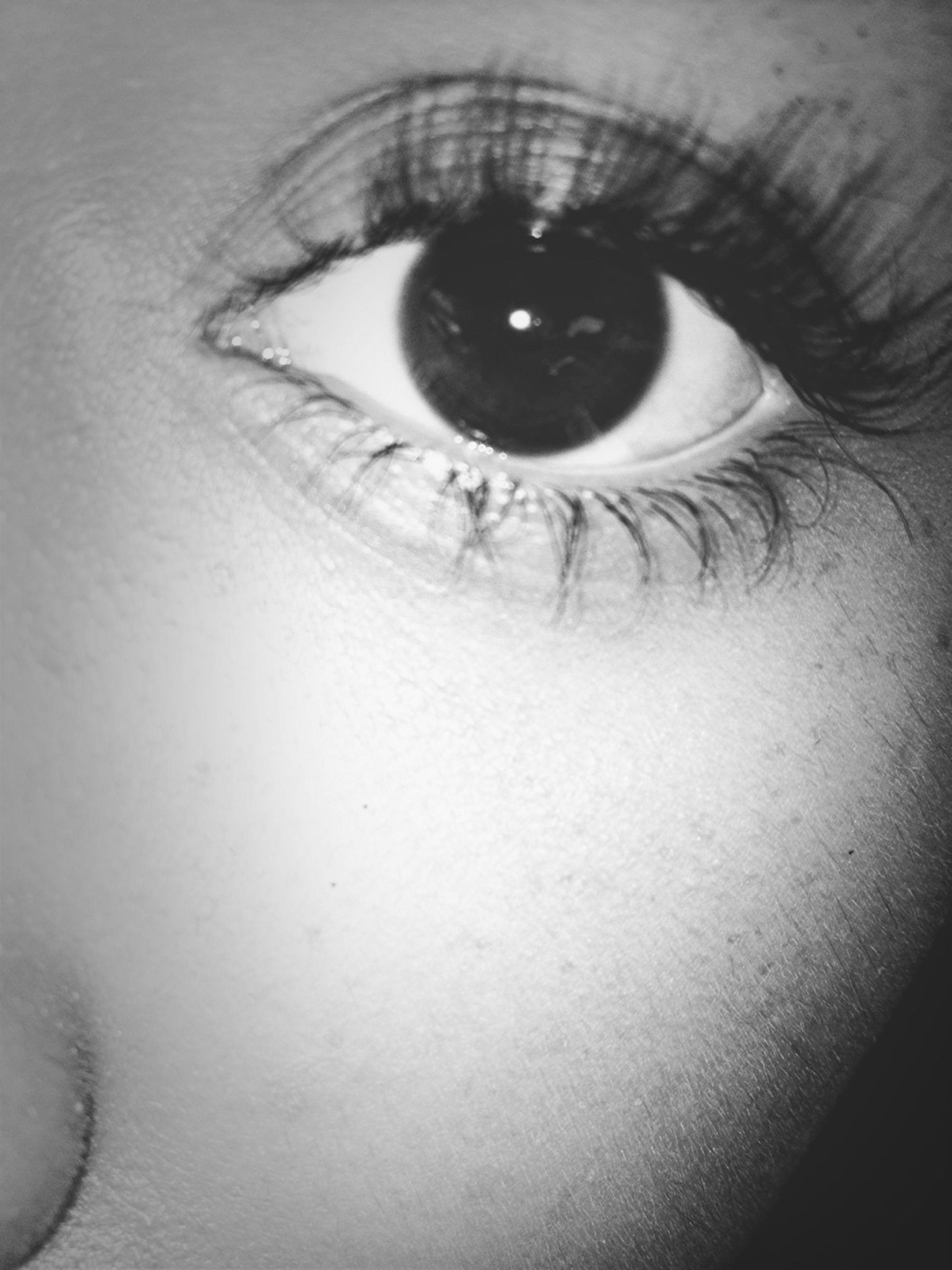 human eye, indoors, close-up, eyelash, looking at camera, portrait, eyesight, extreme close-up, sensory perception, full frame, part of, human face, backgrounds, human skin, iris - eye, lifestyles, front view