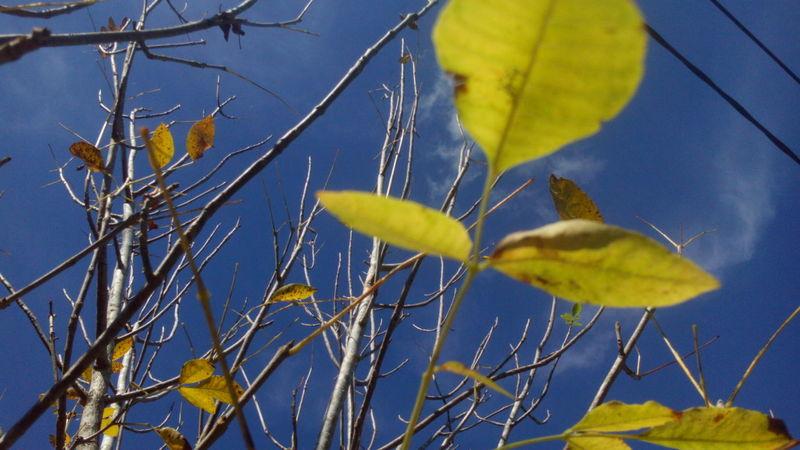 Naturaleza🌾🌿 First Eyeem Photo Tierra Nature Naturaleza🌵🌻🎶 Fotonatural Photo Nature Photography Fotography Hojas De Otoño Hojas Secas Hojasverdes Hojas Y Ramas Arboles , Naturaleza