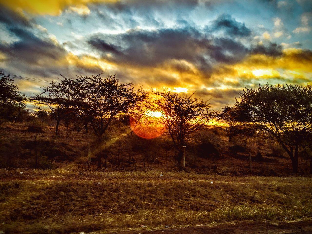African Gold moment Tsavo