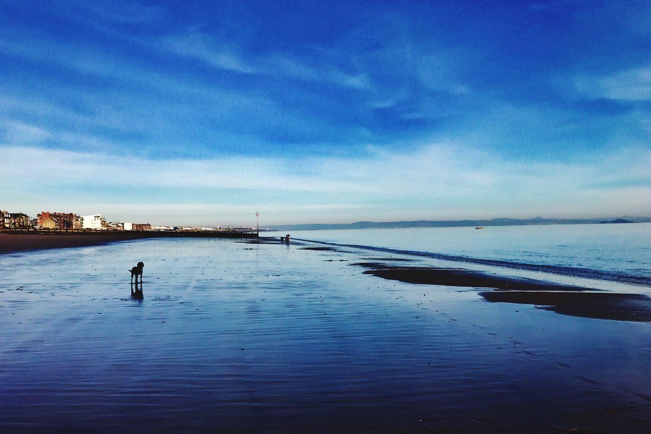 Dogs Of EyeEm Dogonbeach Portobello Beach, Edinburgh Saturday Walk Cloud - Sky The Great Outdoors - 2017 EyeEm Awards