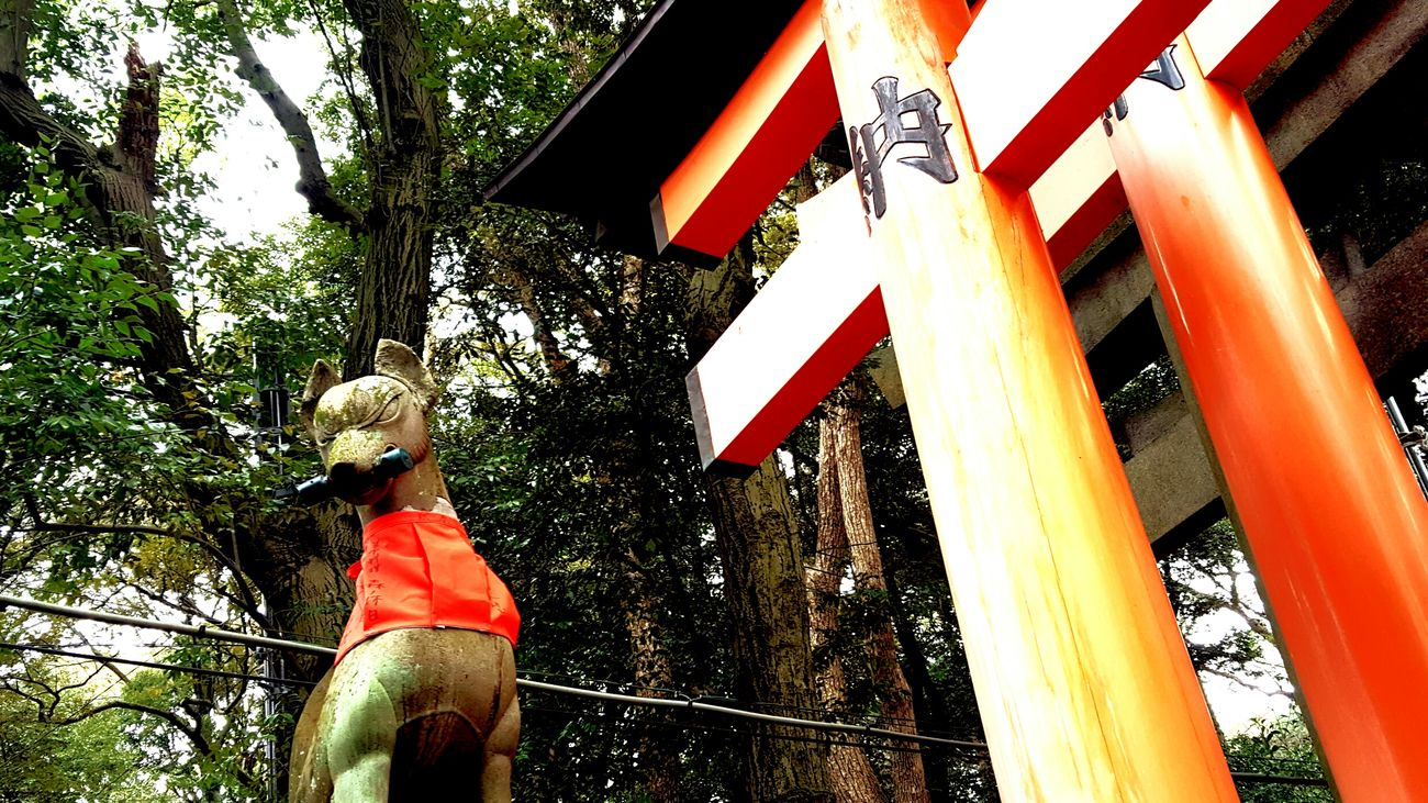 キツネ/fox Japan Japan Photography Fox Fushimi Inari Shrine Oinarisan Kitsune Red