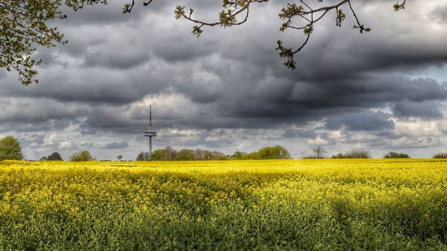 Rapeseed Field RapeFlowers Rapsfeld EyeEm Gallery Funkturm Photooftheday Yellow Flower Yellow Germany Freienwill Nature Photography Landscapes With WhiteWall Landscape Landscape_Collection