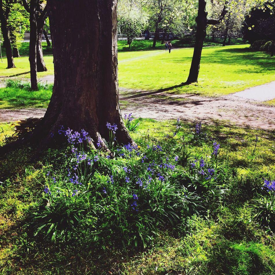 Picking Flowers  Enjoying The Sun Green Bluebells Trees Flowers