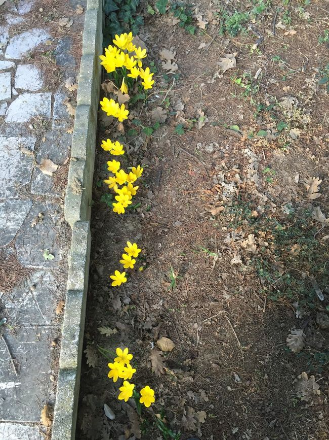 Fall Beauty Yellow Flower Walking Around Walkinginautumn Materials