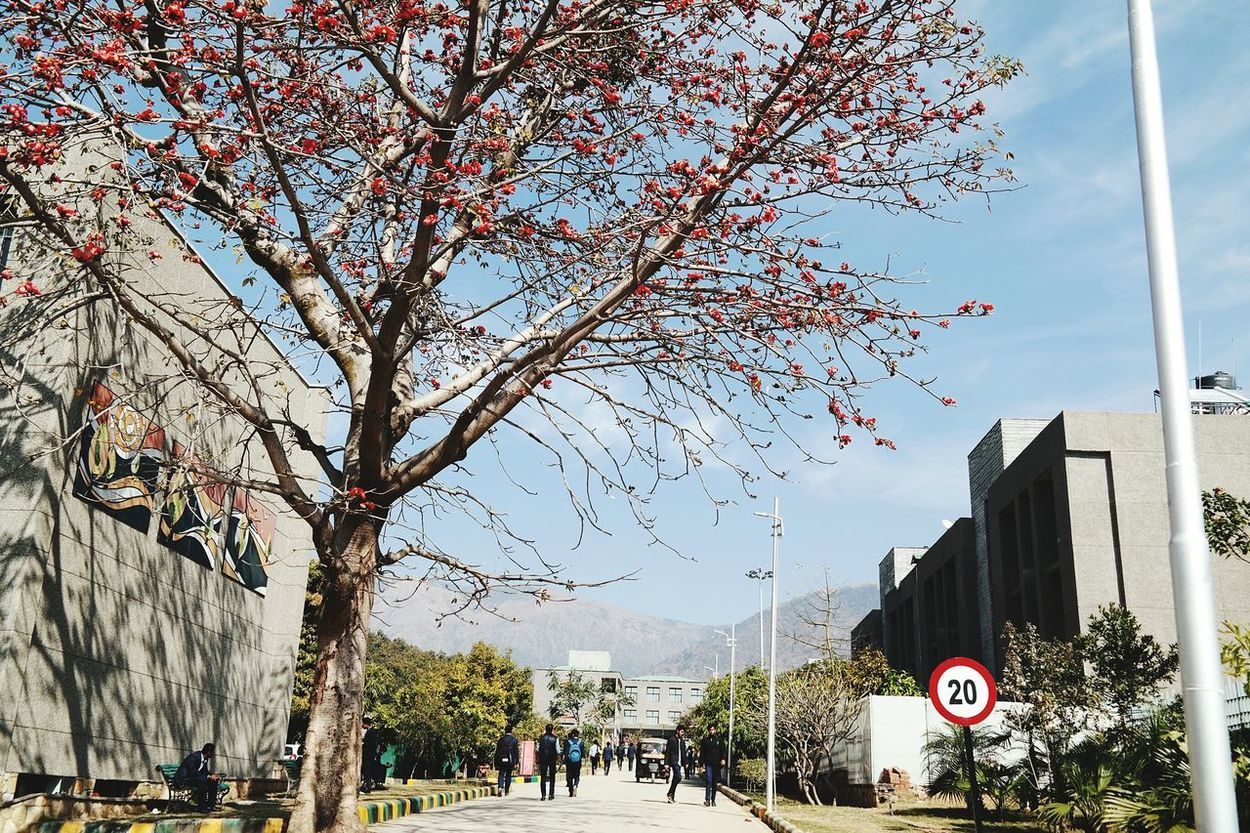 Nature My University Nature_collection Tree Sky And Clouds Cherry Blossoms Beautiful Beautiful Nature Investing In Quality Of Life