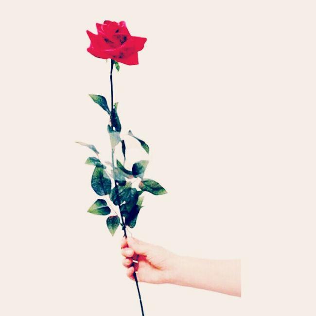 Happy valentines day Lovelovelove Happyheartsday Photooftheday Hello World Lifeisbeautiful EyeEm