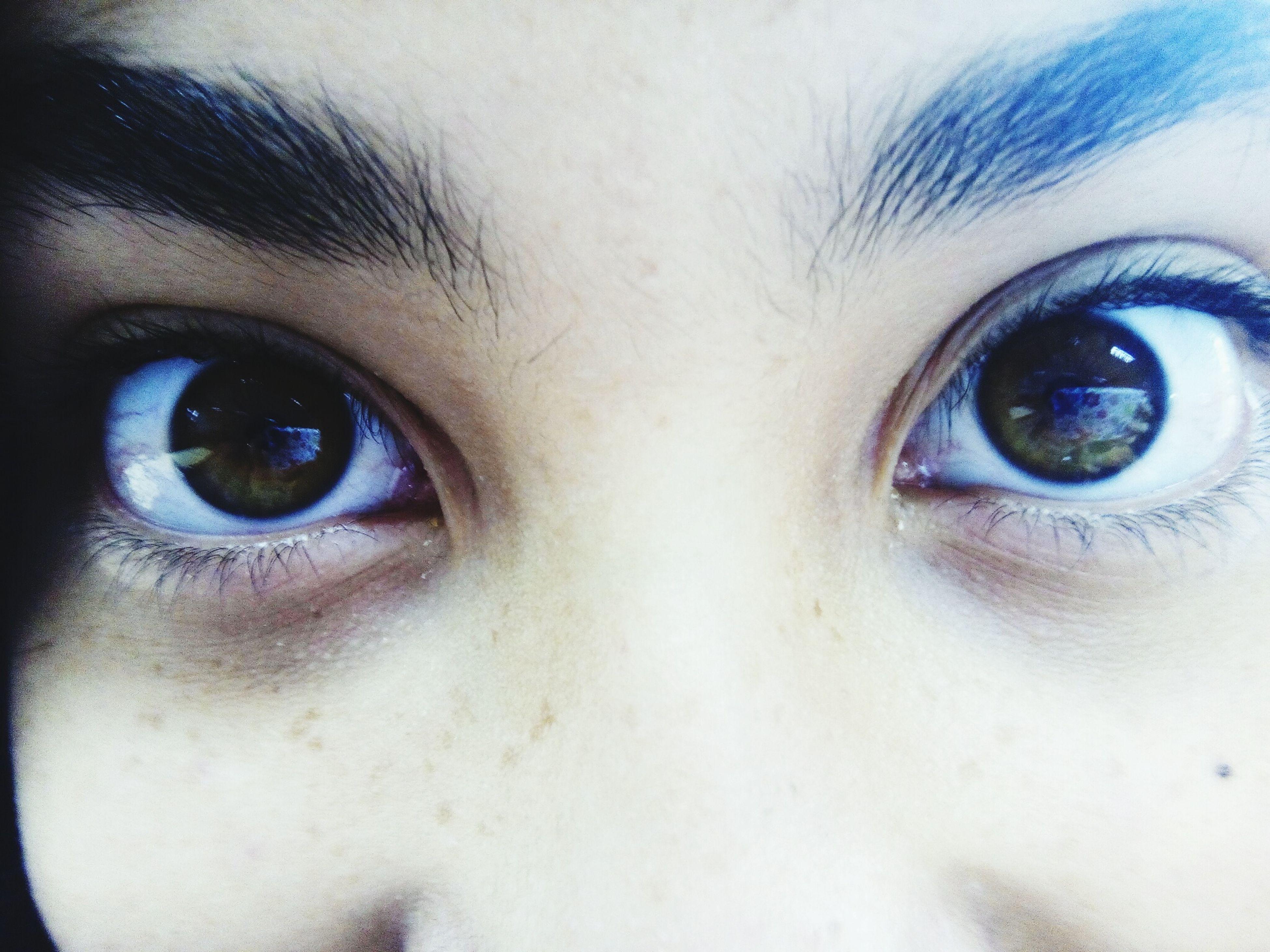 human eye, close-up, looking at camera, portrait, eyelash, eyesight, part of, extreme close-up, extreme close up, human face, sensory perception, indoors, full frame, eyeball, headshot, iris - eye, staring