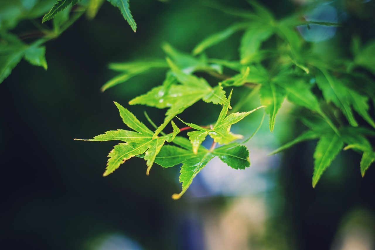 green color, leaf, growth, plant, nature, no people, close-up, outdoors, insect, focus on foreground, animals in the wild, day, animal themes, one animal, beauty in nature, fragility, freshness