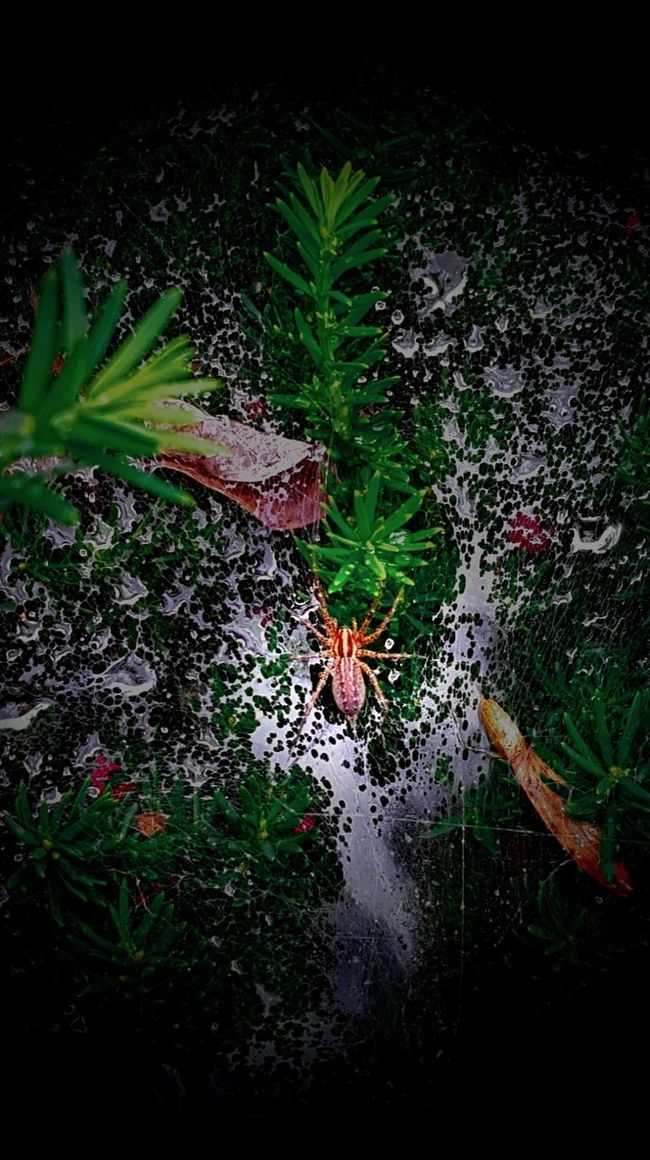 Spider Spider Web Growth Green Color Nature Plant Day Outdoors Beauty In Nature Tranquility Green Multi Colored No People