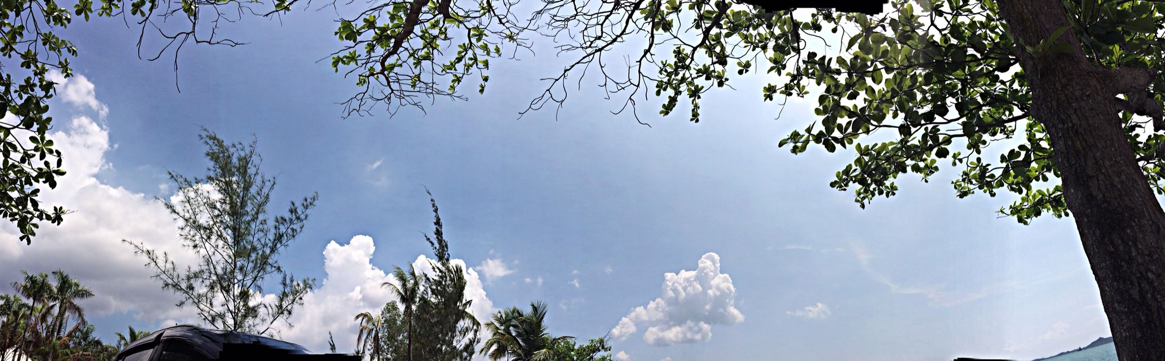 tree, low angle view, branch, sky, beauty in nature, nature, tranquility, growth, scenics, cloud - sky, tranquil scene, silhouette, blue, sunlight, no people, outdoors, day, cloud, high section, idyllic