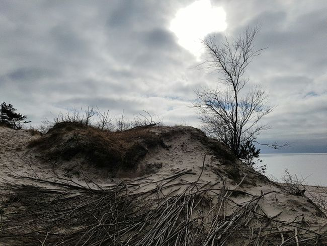 Sky Nature Cloud - Sky No People Outdoors Sand Tree Day Beauty In Nature Beach Close-up Beauty In Nature Klaipeda Baltic Sea Nature Lithuania