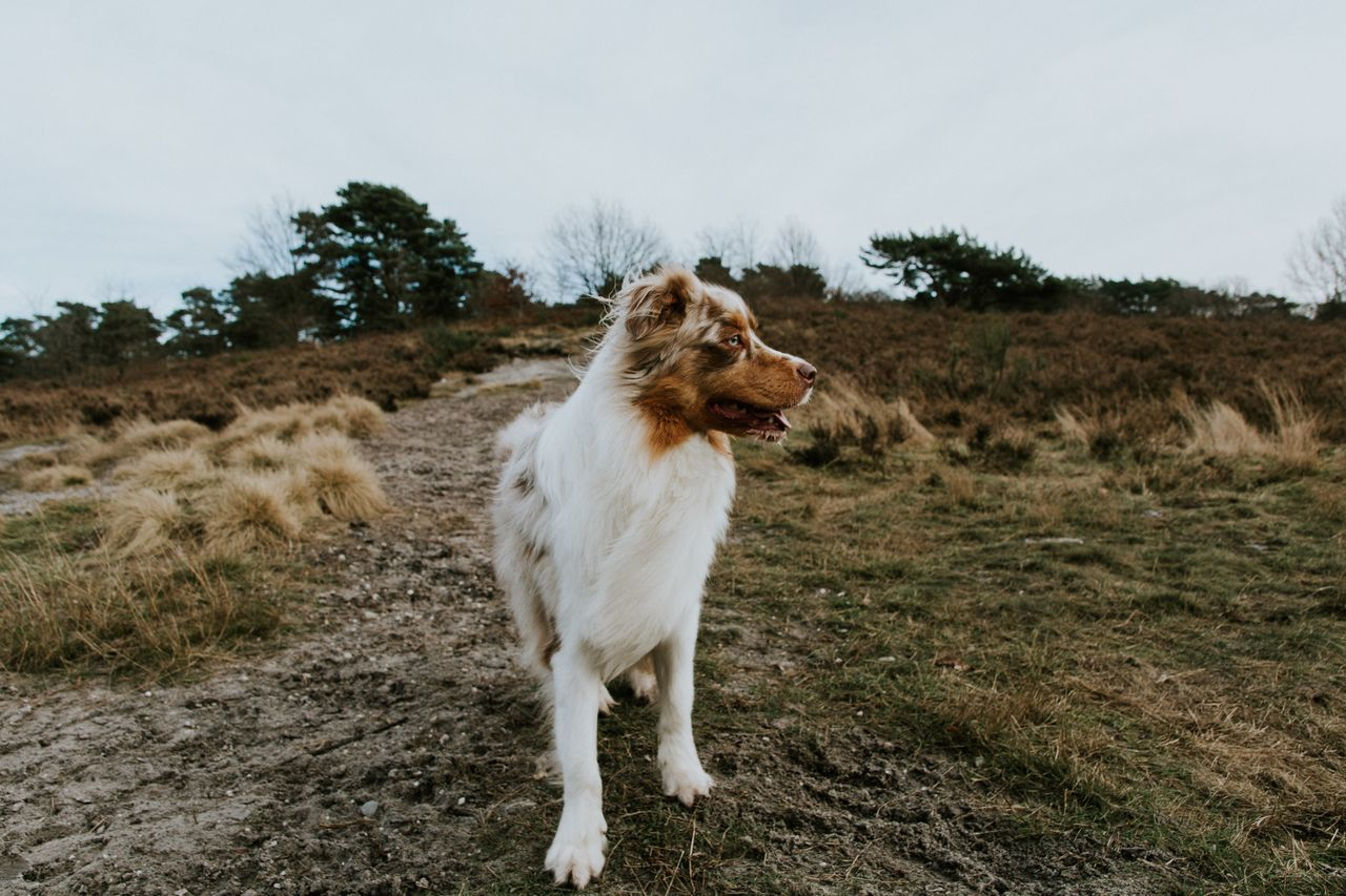 Domestic Animals Animal Themes Mammal Pets One Animal Dog Tree Field No People Full Length Nature Sky Day Outdoors Finding New Frontiers Focus On Foreground Check This Out The Week Of Eyeem Dogs Nature_collection EyeEm Nature Lover Eye4photography  EyeEm Best Shots Beautiful Nature