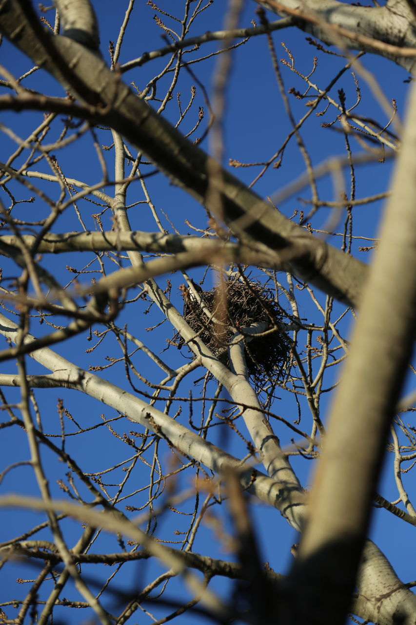 one animal, branch, animals in the wild, animal wildlife, animal themes, tree, bird, day, perching, nature, low angle view, no people, outdoors, beauty in nature, sparrow, close-up, sky