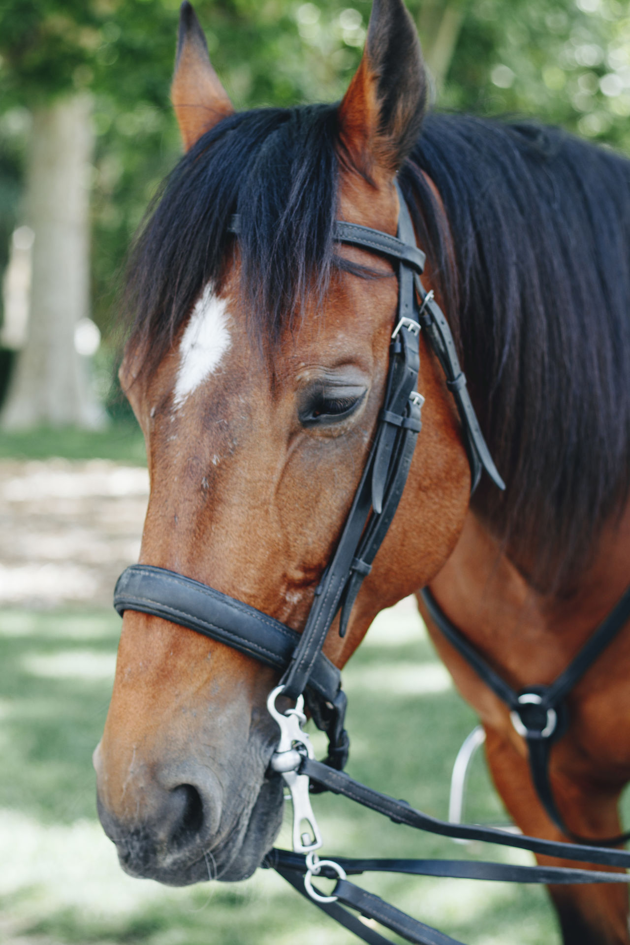 Animal Themes Bridle Brown Close-up Day Domestic Animals Horse Livestock Mammal No People One Animal Outdoors Standing