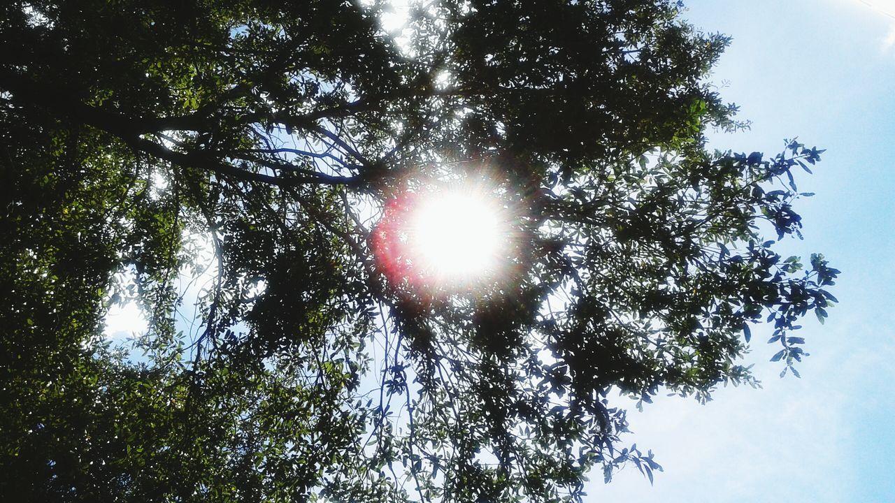 Florida Life My View :) Lookingup Sunnydays Shine Bright Upside Down Hello World