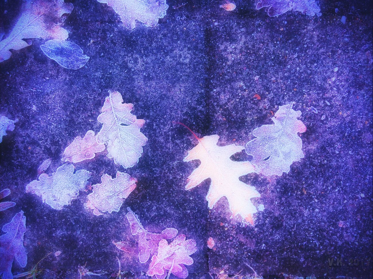 Leafes on the ground Pattern Close-up No People Purple Full Frame Illuminated Outdoors Leafes
