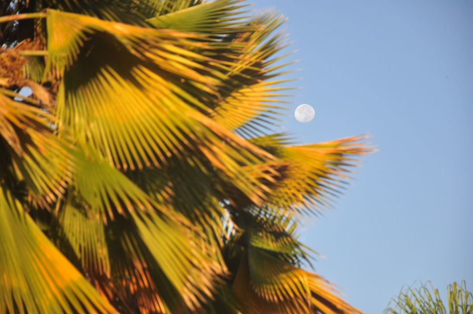 Beautiful stock photos of mond, Branch, Clear Sky, Day, Growing